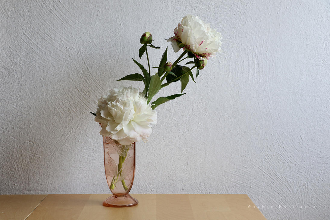 White Peonies by wiebkerost