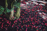 230 Years Old Camellia Tree by wiebkerost