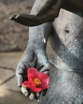 Camellia Girl by wiebkerost