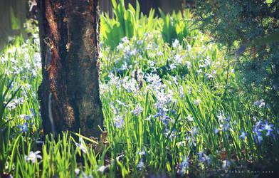 Fairyland II by wiebkerost