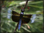 Dragonfly 40D0011523