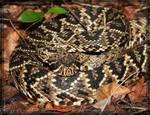 Rattlesnake 40D0001010