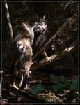Bobcat 40D0026826