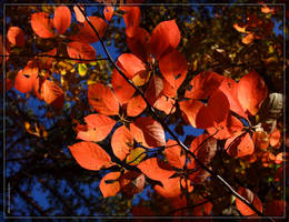 Leaves 20D0050955 by Cristian-M