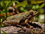 Cricket Frog 50D0000018