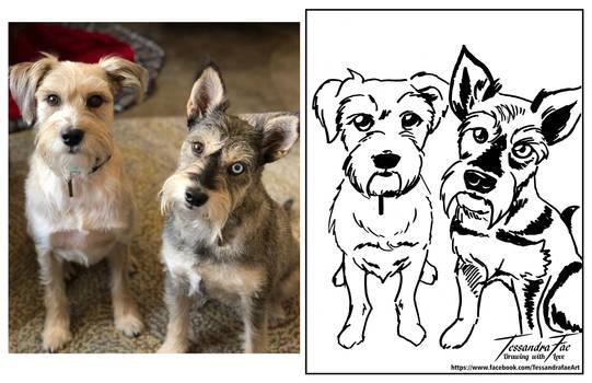 Pet Caricatures - Schnauzers