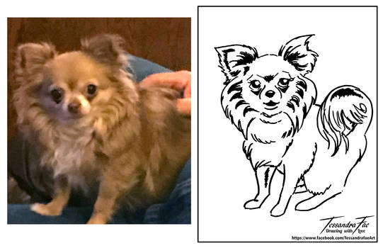 Pet Caricatures - Long Haired Chihuahua