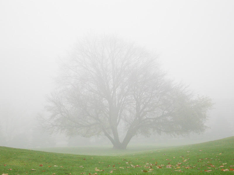 fog with tree by Lillabug