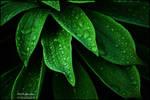 Little green...