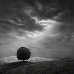 Chestnut tree by Kleemass