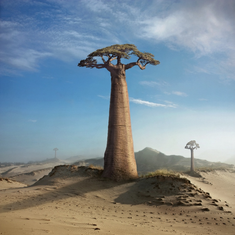 Land of the Baobabs by Kleemass