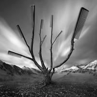Dandruff Tree by Kleemass