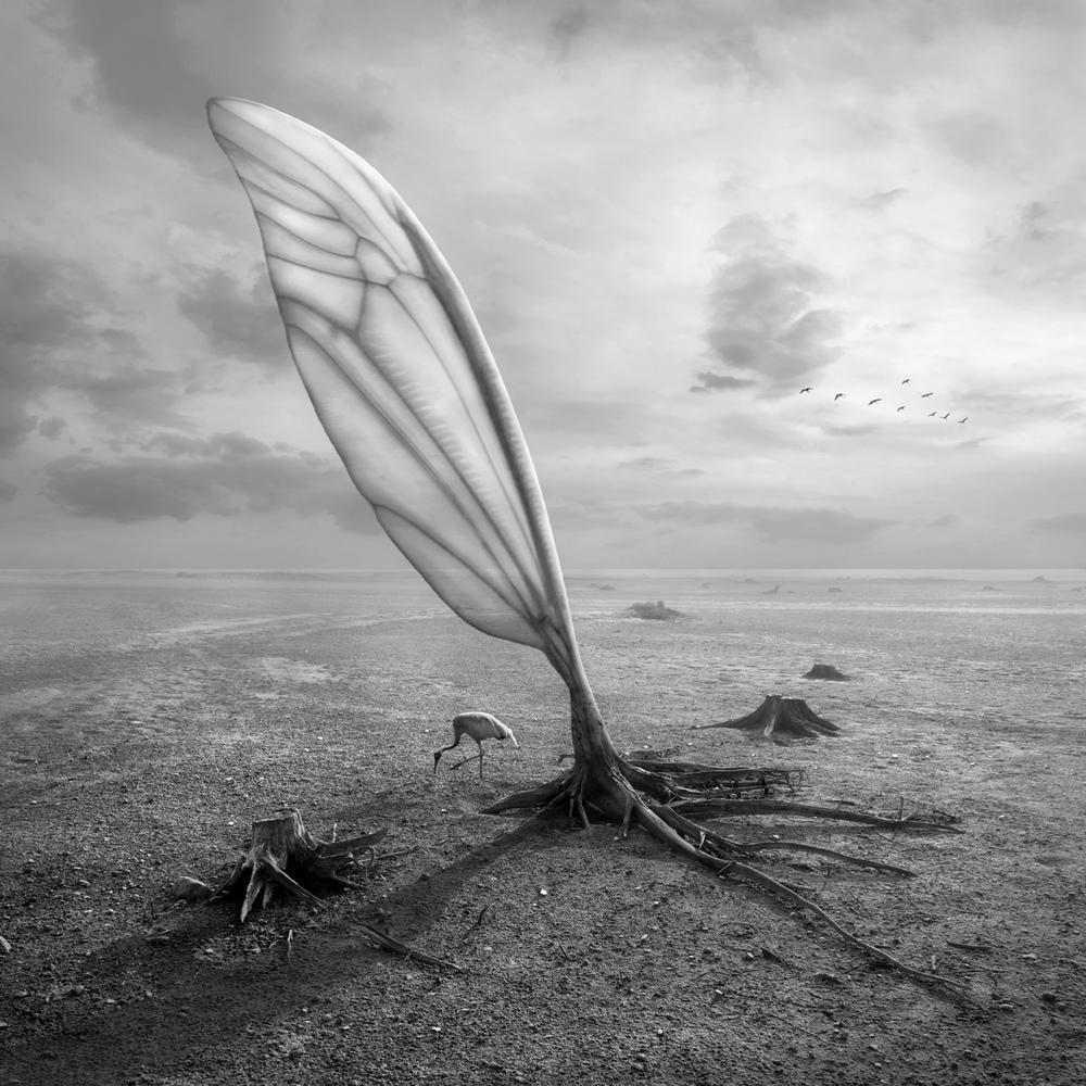Wingland by Kleemass