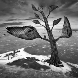 Wingtree by Kleemass