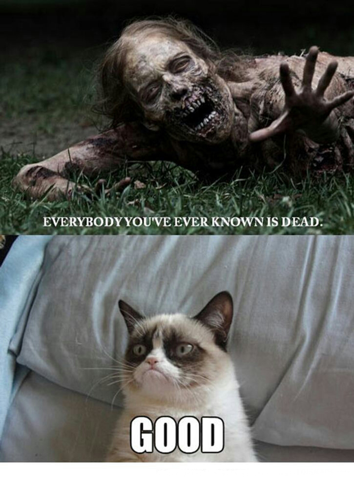 Good Morning Zombie Meme : Grumpy cat meme by fan on deviantart