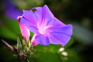 Bright Flower by kasxp