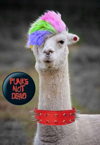 Punk llama by MizukiManson483