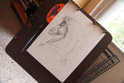 WIP# Horse bust portrait