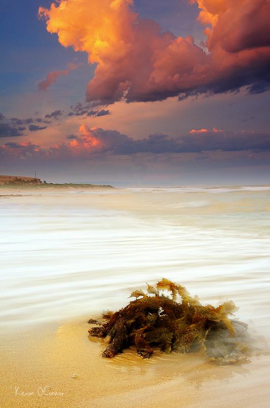 Seaweed Drift by InnerComa