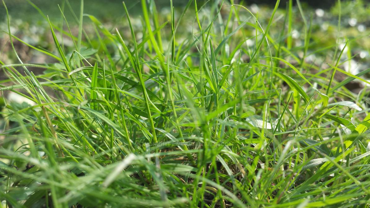 Beautiful HD Grass by MidNightAA
