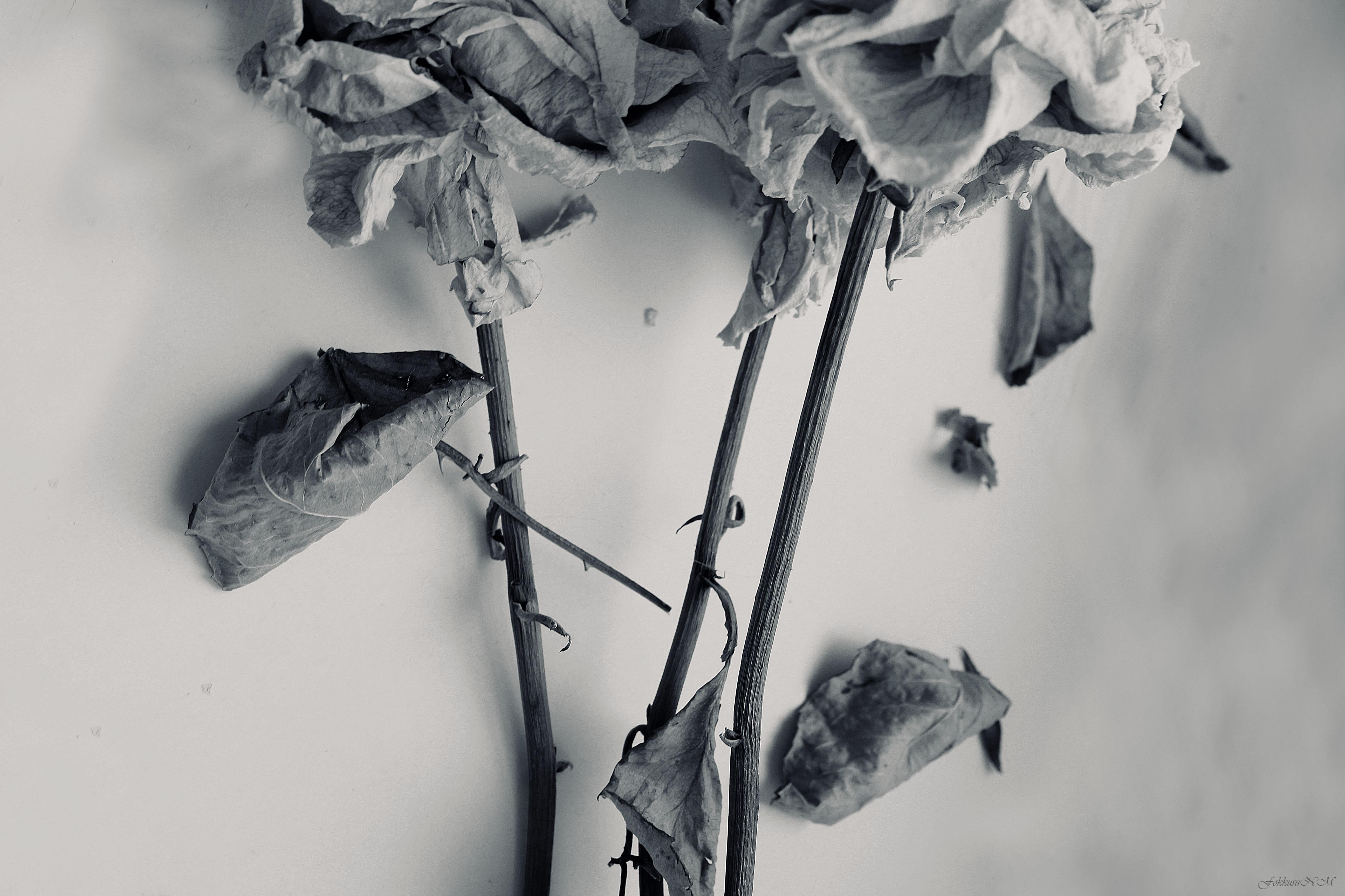 silence by FokkusuNM