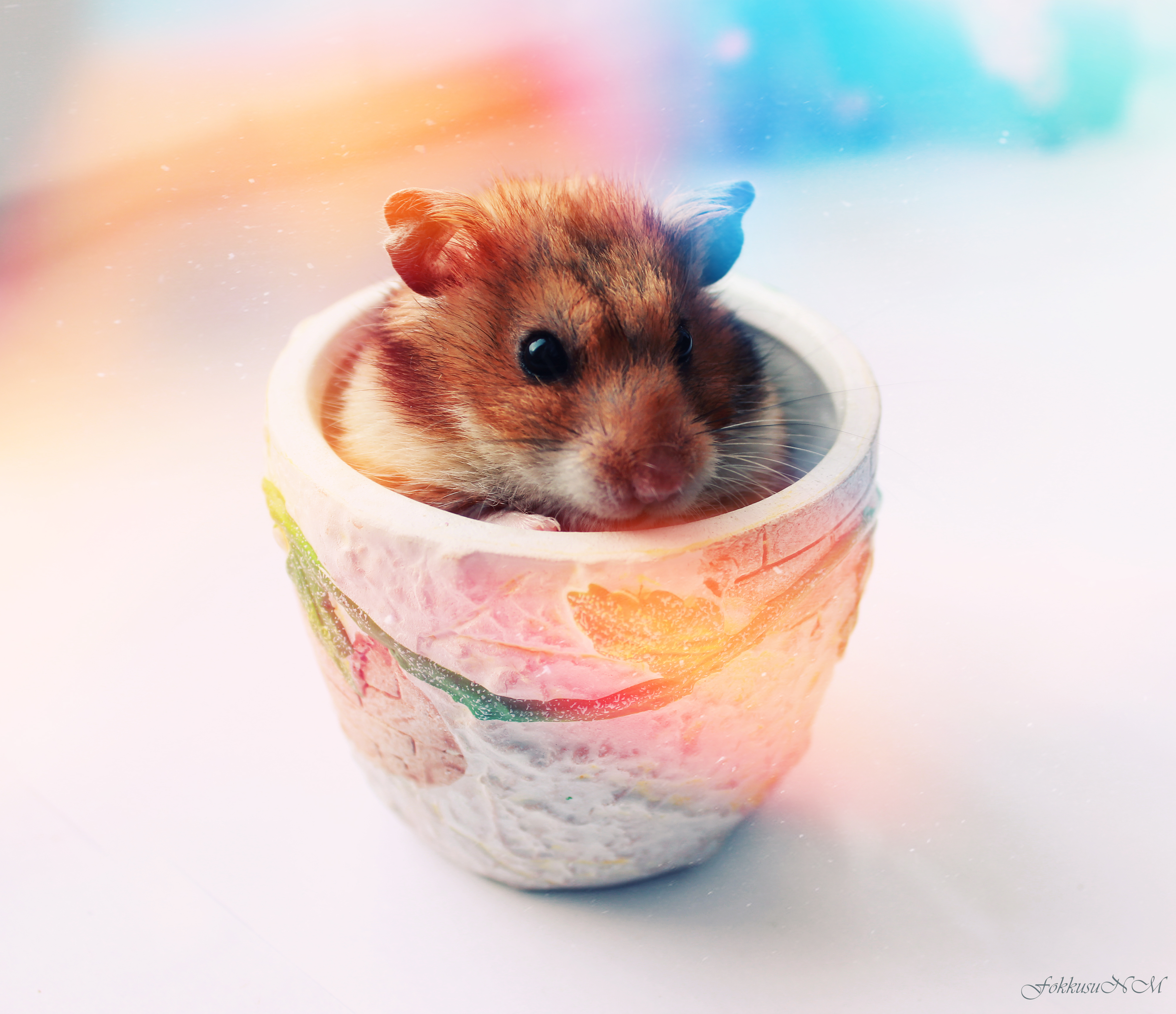 hamster by FokkusuNM