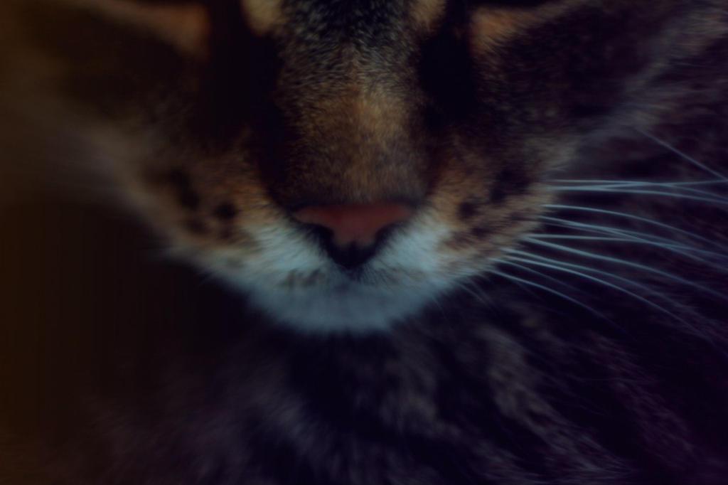 cute nose by FokkusuNM