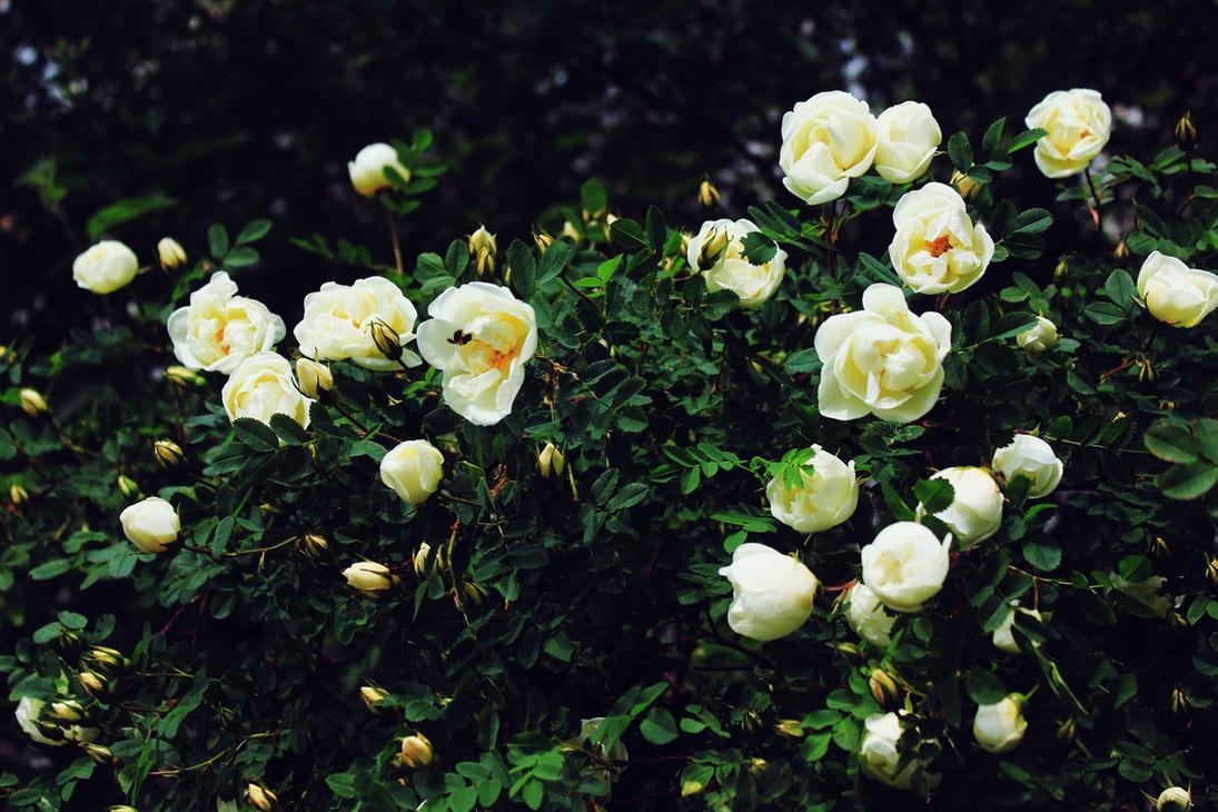 summer flowers by FokkusuNM