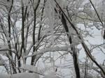 Snow Stock 1