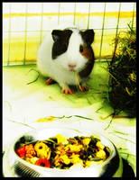 My Guinea Pig Sunny