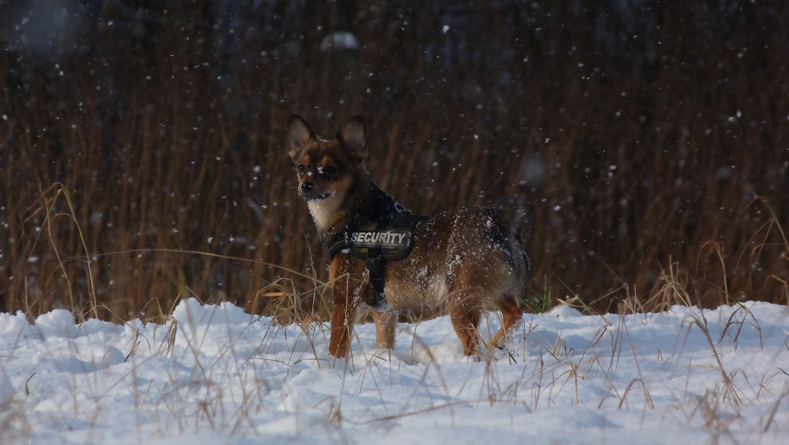 Snowfall by oOBrushstrokeOo