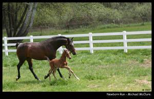 Newborn Run by MnMrMustard