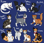 Doctor Who Companion Cats