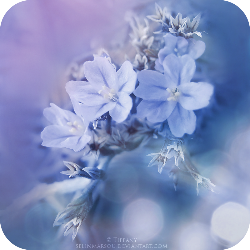 Fragile blueness by selinmarsou