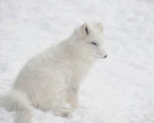 Arctic Fox by LilyWyte