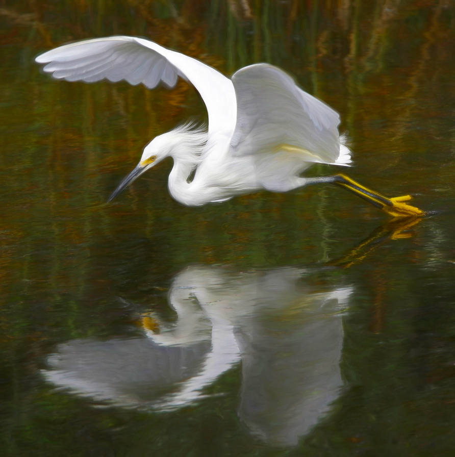 Snowy Egret and Reflection by LilyWyte