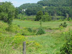 CT River Meadows