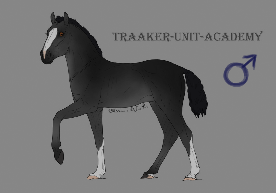Calico - Foal Design by CalyArt