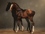 SWS Semper Victor - FOAL~ by CalyArt