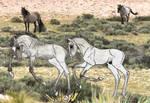 Foals at frolic