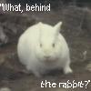 Monty Python's Rabbit by Torasama