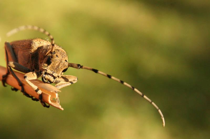 Bug by kalf
