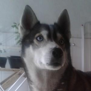 RiliannCosta's Profile Picture