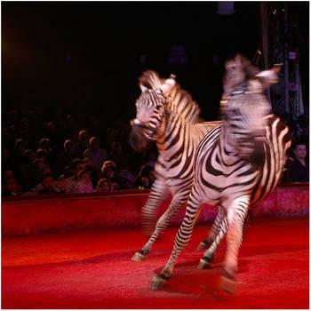 moirure de zebre by altair33