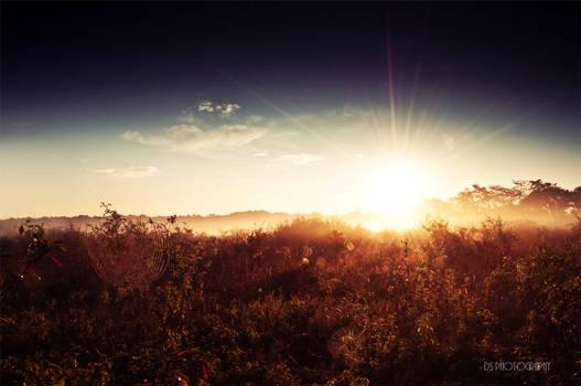 torwards the sun