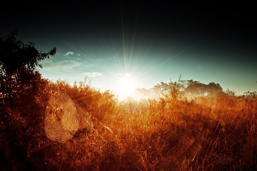 into the wild by DavidSchermann