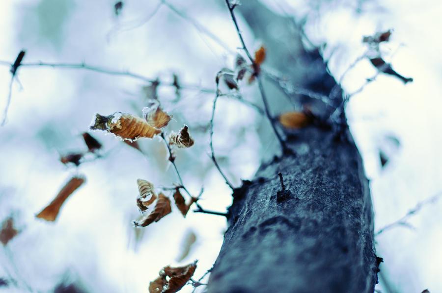 Frozen by DavidSchermann
