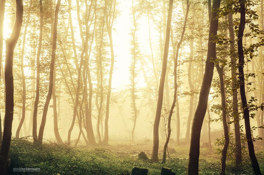 warming fog by DavidSchermann