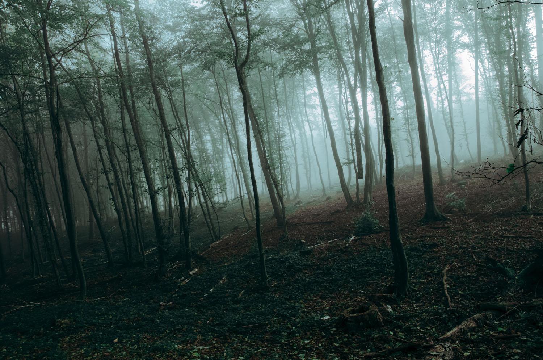 Empire of Fog by DavidSchermann