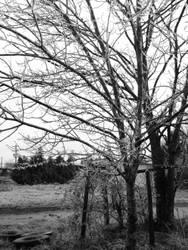 Winter by LawnyJ